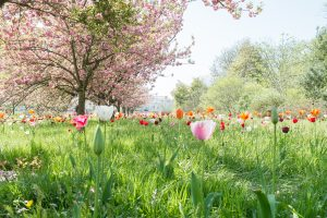 Kew Gardens Family Photography